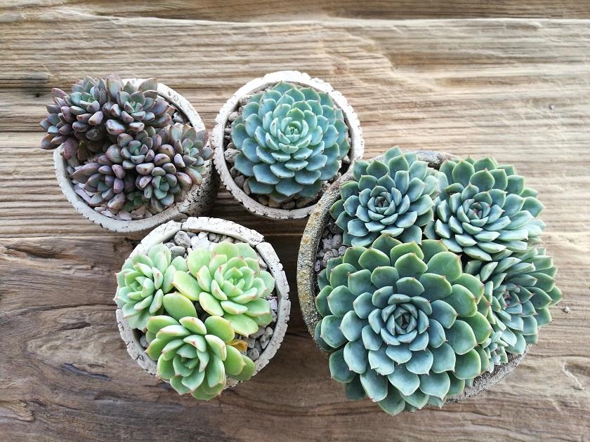 Dieses Arrangement aus Sukkulenten ist eine schöne Dekoration.