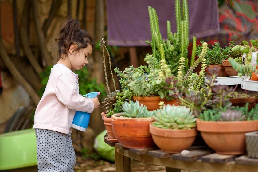 Kleines Mädchen gießt mit einer Sprühflasche Sukkulenten im Garten.