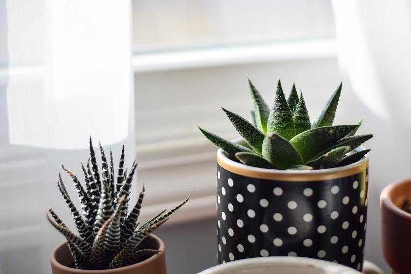 Schöne Töpfe für Aloen.