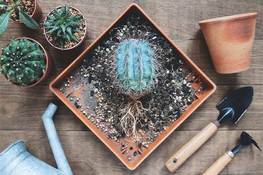 Wenn du einen Kaktus einpflanzt, brauchst du spezielles Werkzeug.