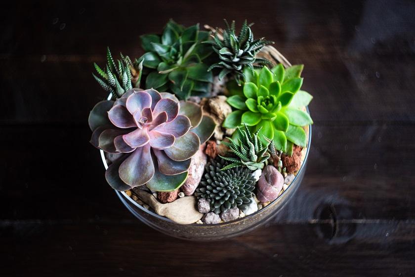 Sukkulenten können auch mit mehr Abstand in einem Glas gepflanzt werden.