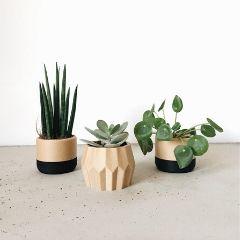 Blumentöpfe für Sukkulenten aus Holz mit schwarzen Elementen.