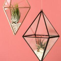 Die hängenden Glastöpfe sind schön für wurzellose Pflanzen.