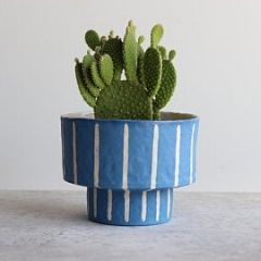 Blaue Töpfe sind schön für Kakteen.