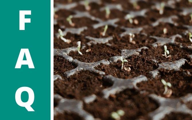 Die Samen von Sukkulenten umtopfen beim vermehren.