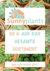 Sunny Plants ist ein Online Shop für Sukkulenten.