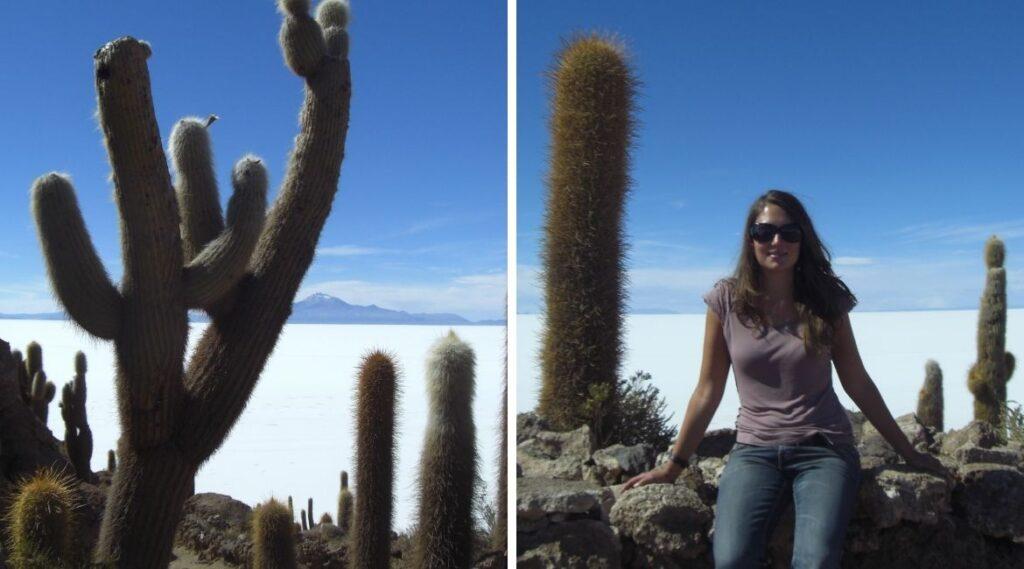 Der San Pedro Kaktus wird sehr groß.
