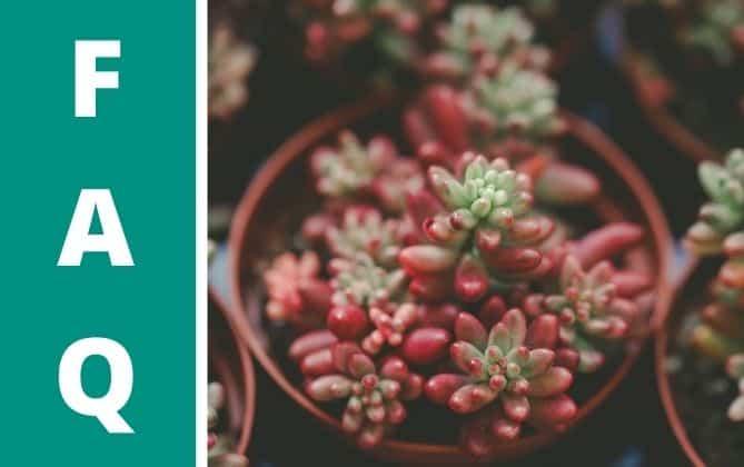 Sukkulenten können ihre Farbe ändern.